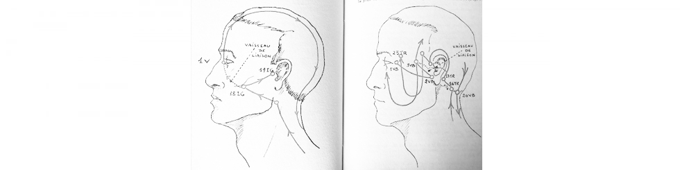 meridiani della testa lunga